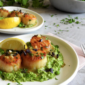Pea Puree and Scallops on a plate